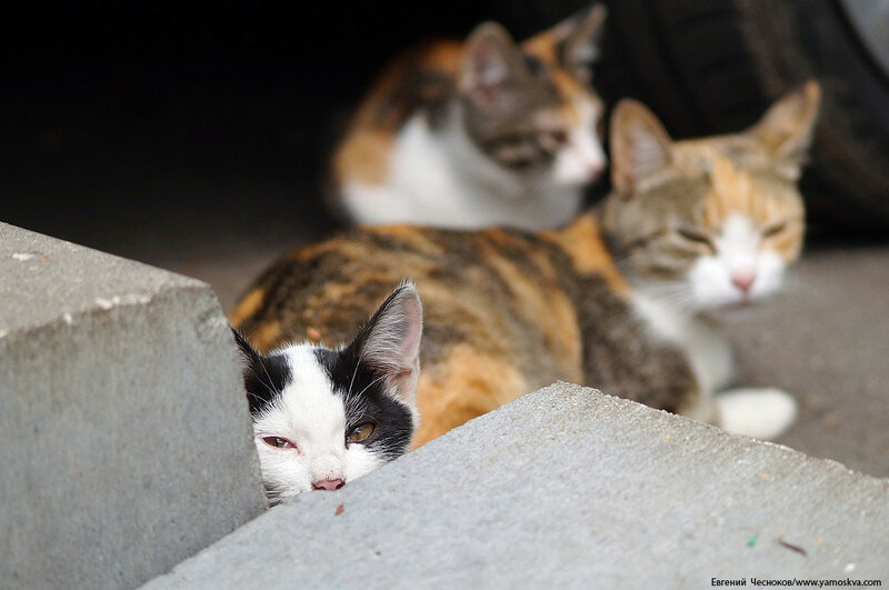 91В. Анненская улица. 11.07.17.07. котики...jpg