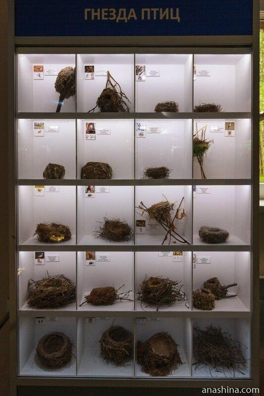 Музей природы, заповедник Кивач