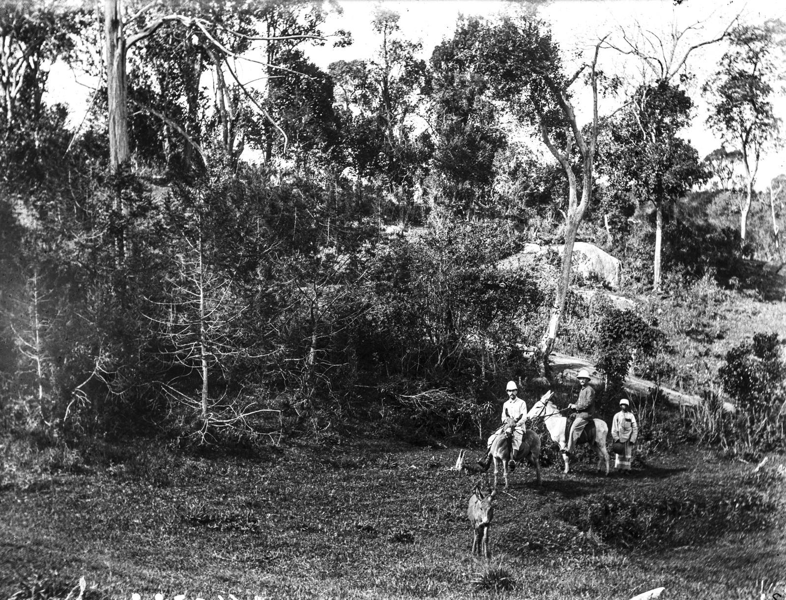 39. Два члена экспедиции на мулах, справа Техмер