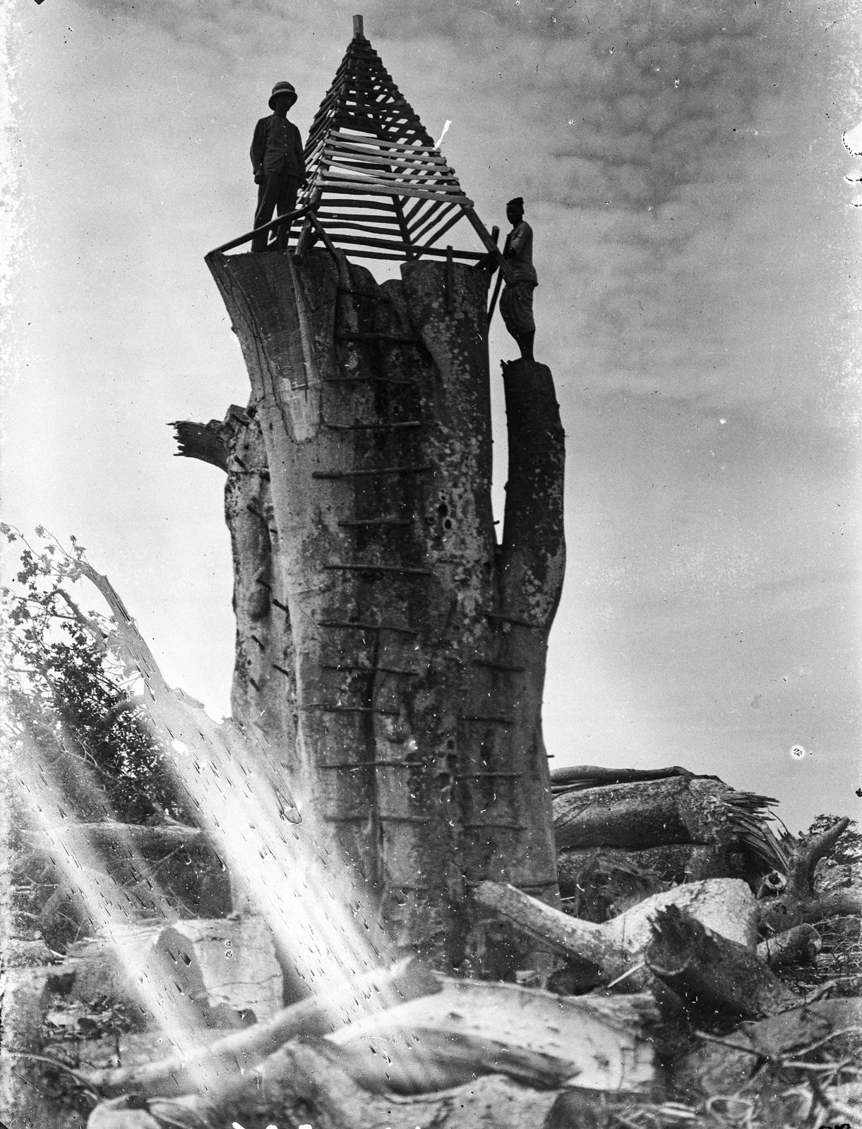 43. Танга. Двое мужчин и пирамидальная рама на распиленном стволе баобаба
