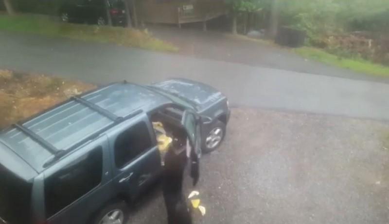 Медведица с медвежонком забрались в автомобиль американца