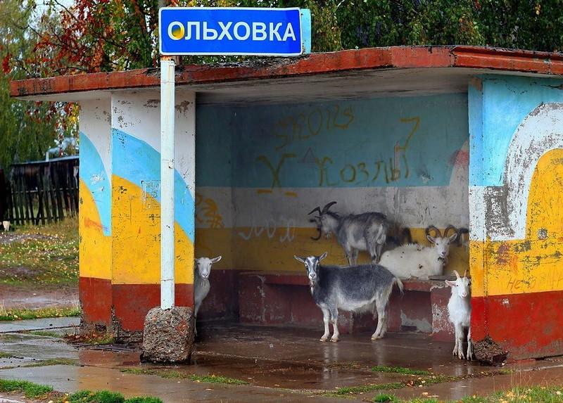 0 180e94 4981825b orig - Российская фотоподборка: О жизни, о мечтах, о глупости