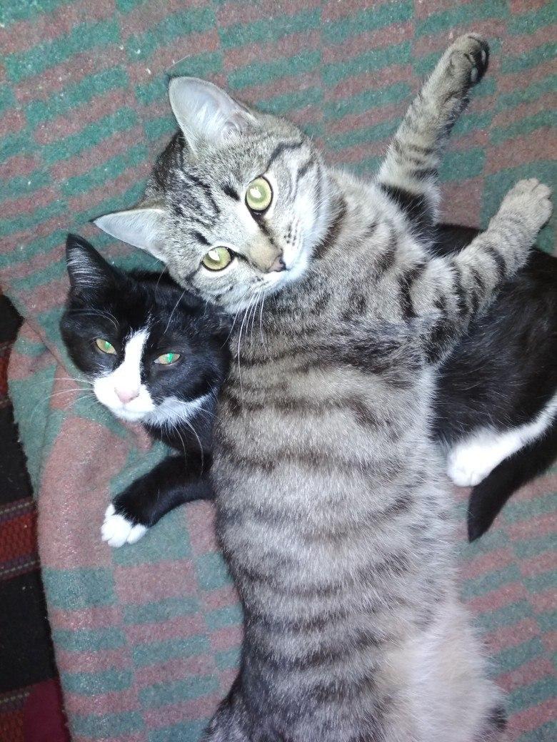 Мусю выкинули еще котёнком фото