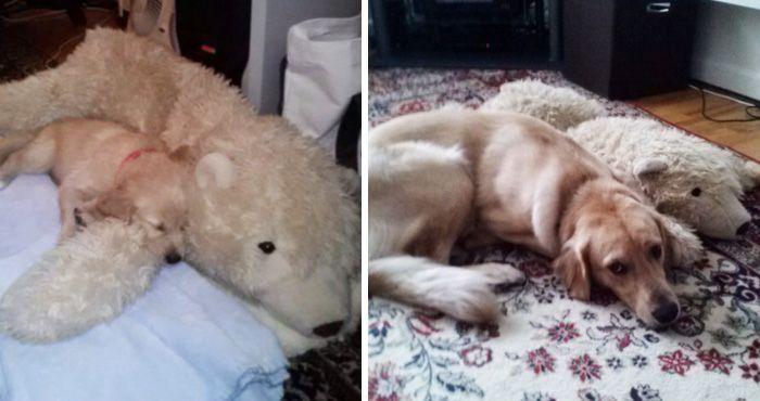 3. Год спустя он все еще любит спать рядом с этим мишкой.