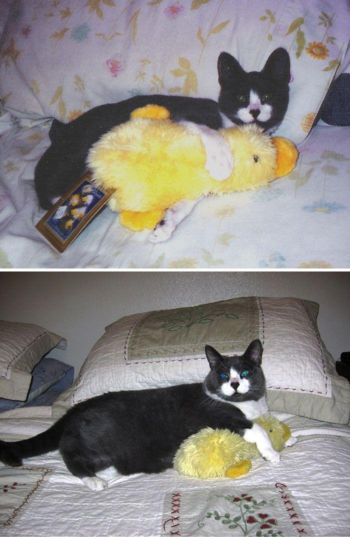13. Семь лет спустя он по-прежнему любит этого утенка.