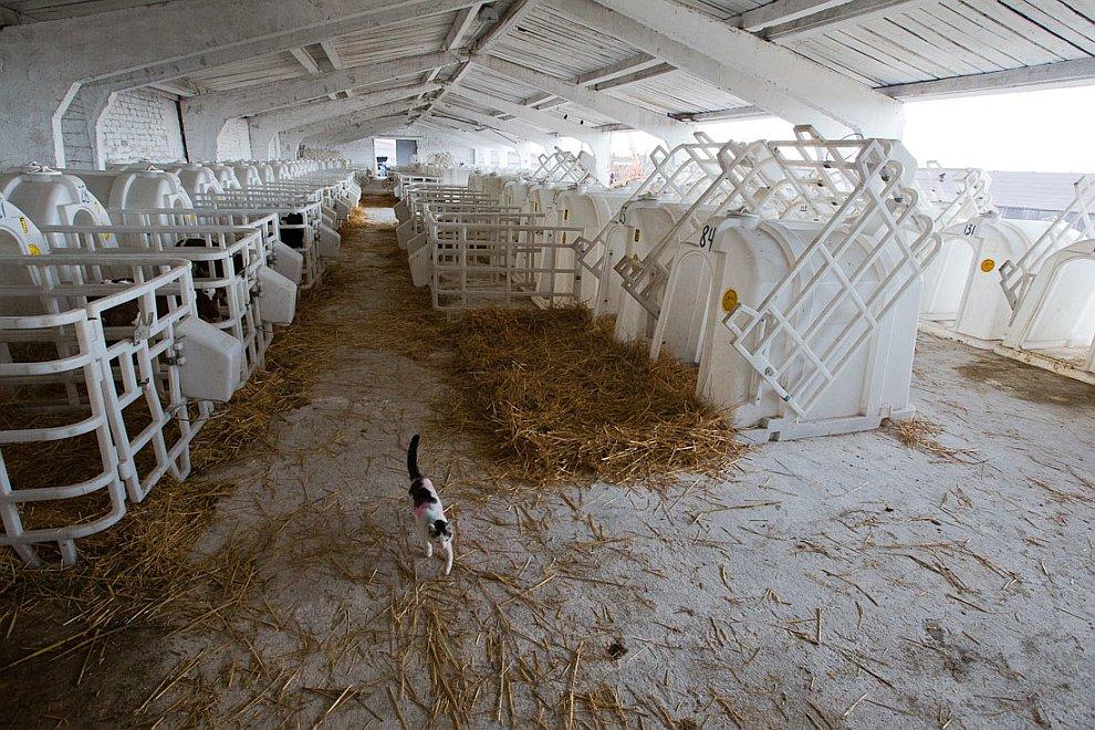 Неподалеку аккуратная линейка техники, которую приготовили к зимовке. Финские коровы доятся немецким