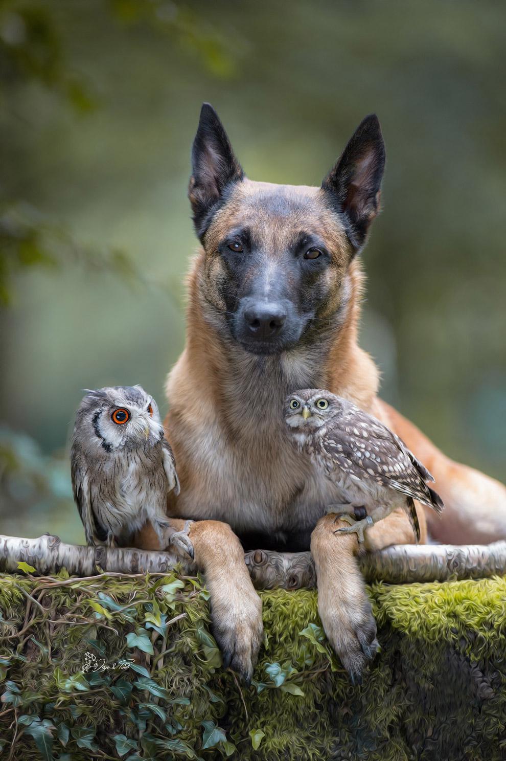 Настоящие друзья
