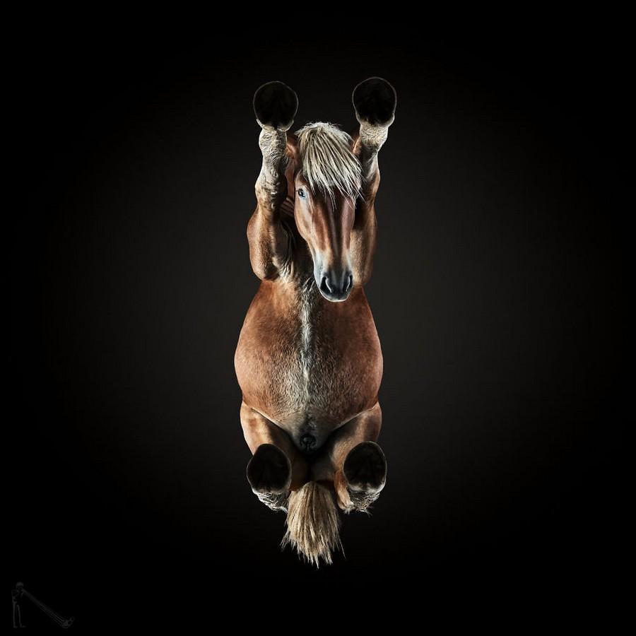Под конём – самая сложная фотосессия Андриуса Бурбы (15 фото)