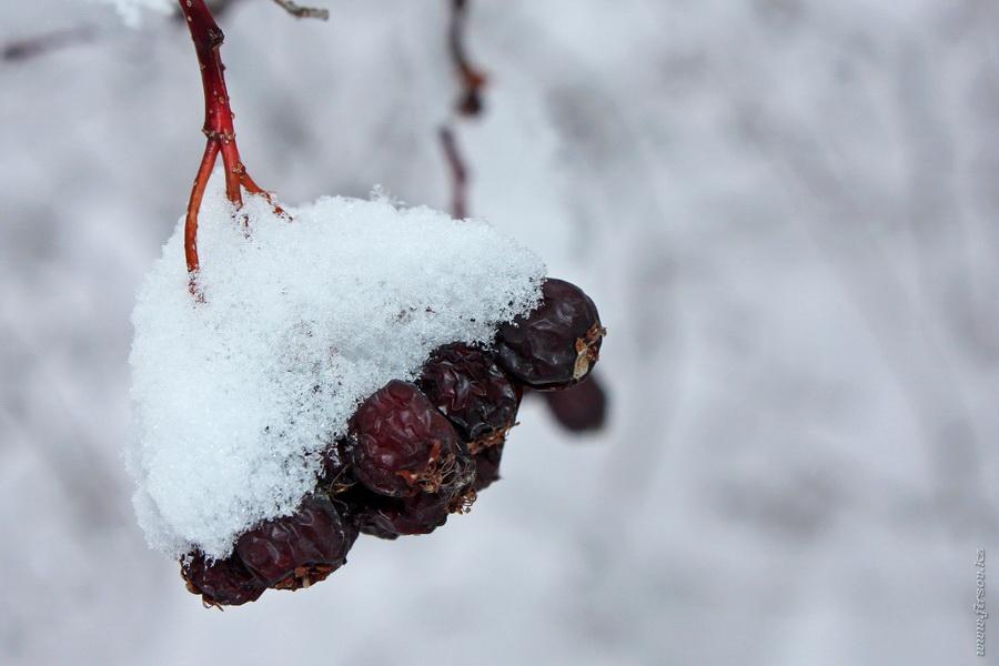 winter14.JPG