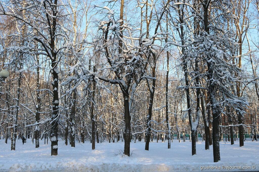 Зимнее утро в Петровском парке