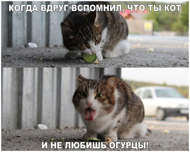 Когда кот вспомнил