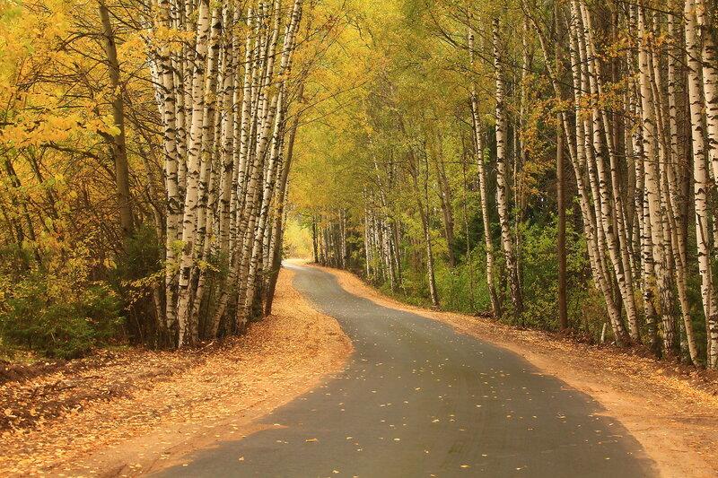 Дорога среди осени