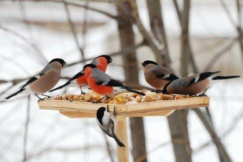 Птички.jpeg