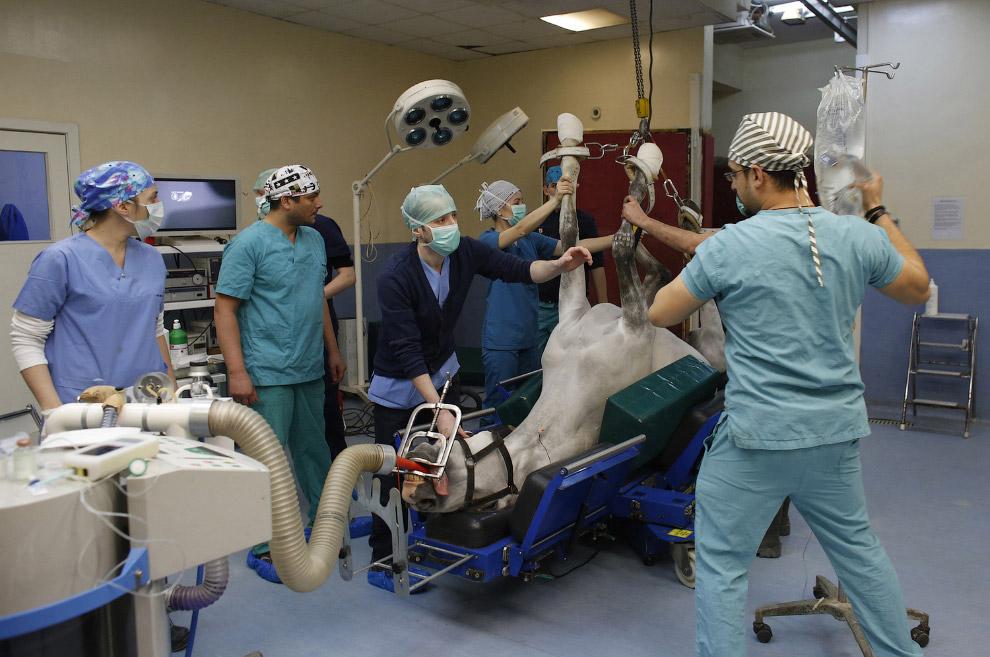 12. Это другой пациент, его тоже доставляют на операционный стол. Стамбул, 3 марта 2015. (Фото