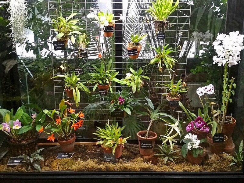 Орхидеи в тропической оранжерее в Аптекарском огороде
