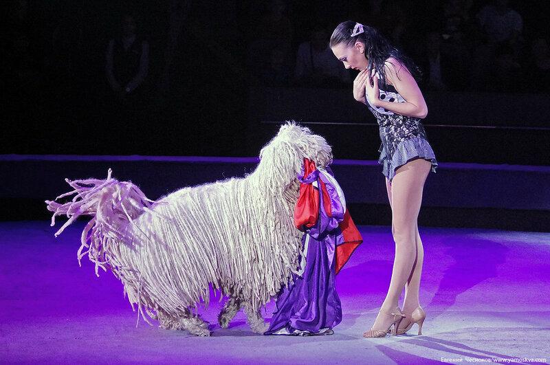 Цирк Дарьи Костюк. Вегас. 15.10.17.54..jpg