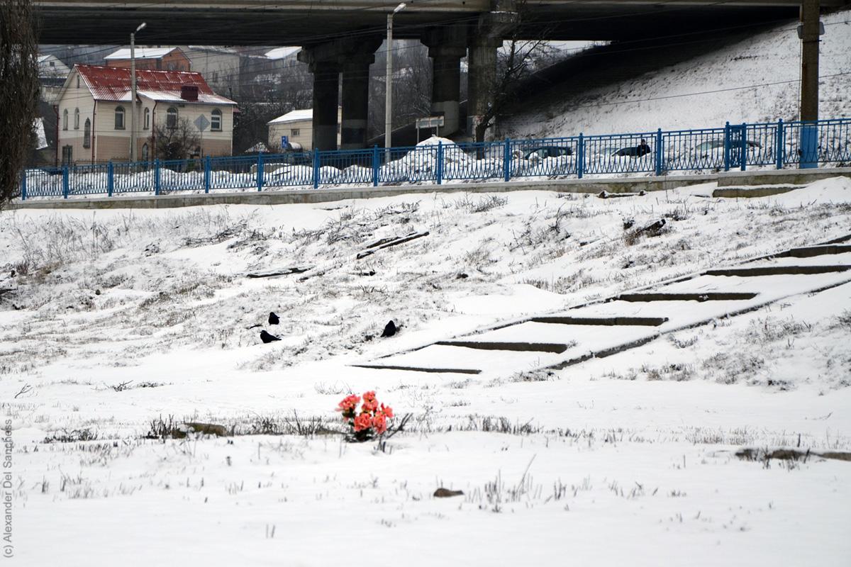 Цветы на месте, где был похоронен Андрей Попов