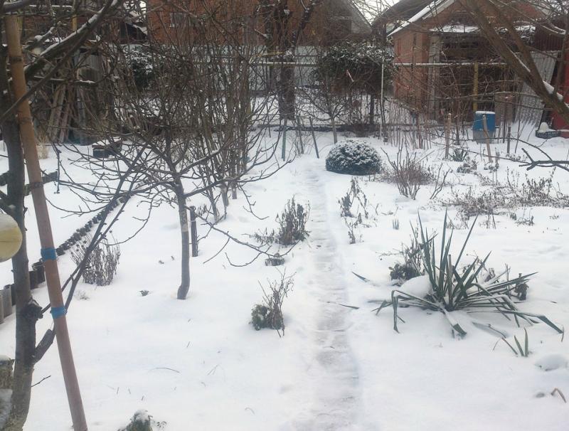 снег-00.jpg
