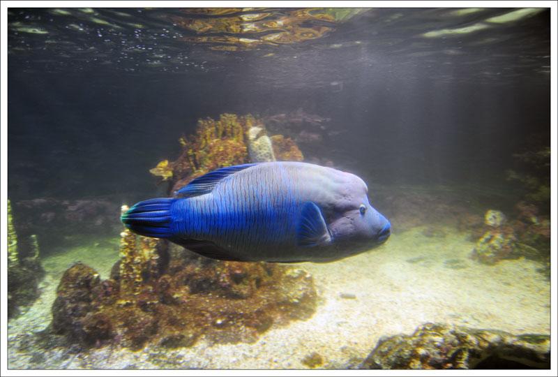Генуэзский аквариум