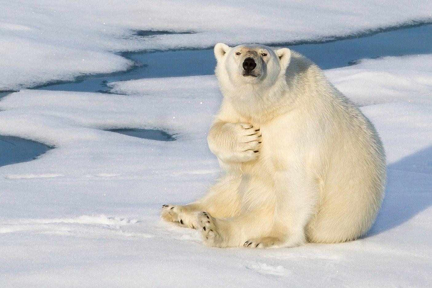 День полярного медведя. Посидим, поговорим по душам