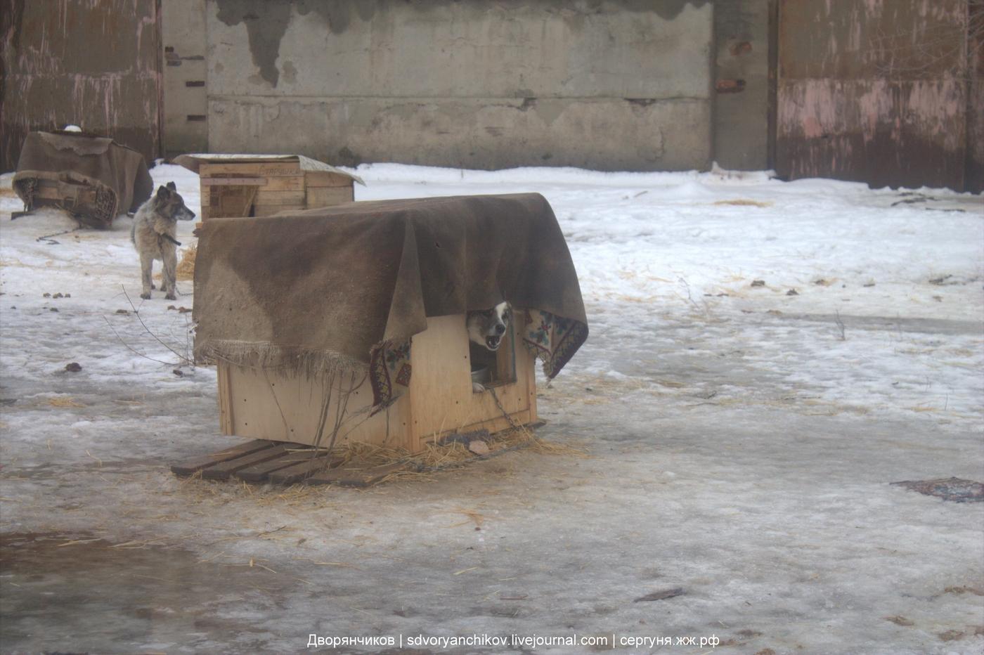 Priut34 - Великое междуречье - 05 февраля 2018