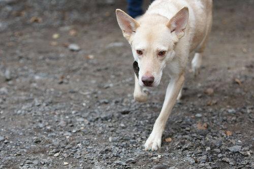 Марли собака из приюта догпорт в добрые руки фото