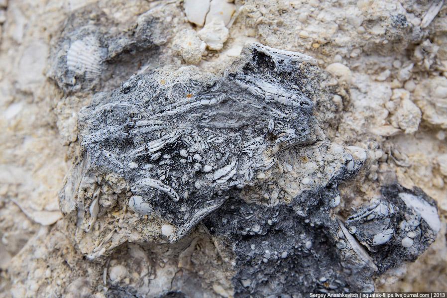 21. Некоторые моллюски сами стали камешками.