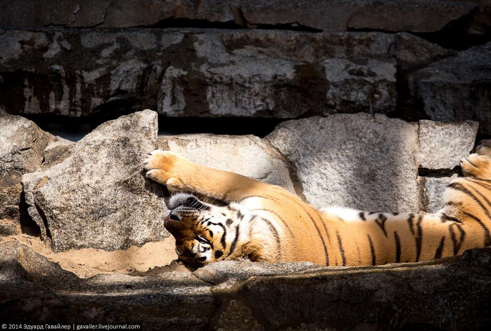 Берлин животные времена года зоопарк зоопарки парки парк