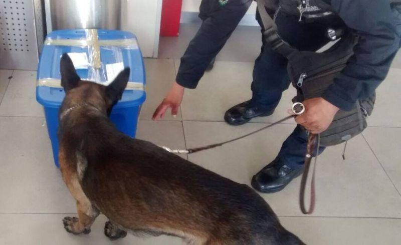 Полицейская собака нашла на почте посылку с живым тигренком (3 фото)