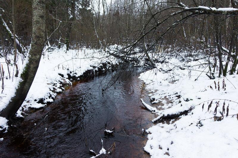 ручей в лесу в декабре