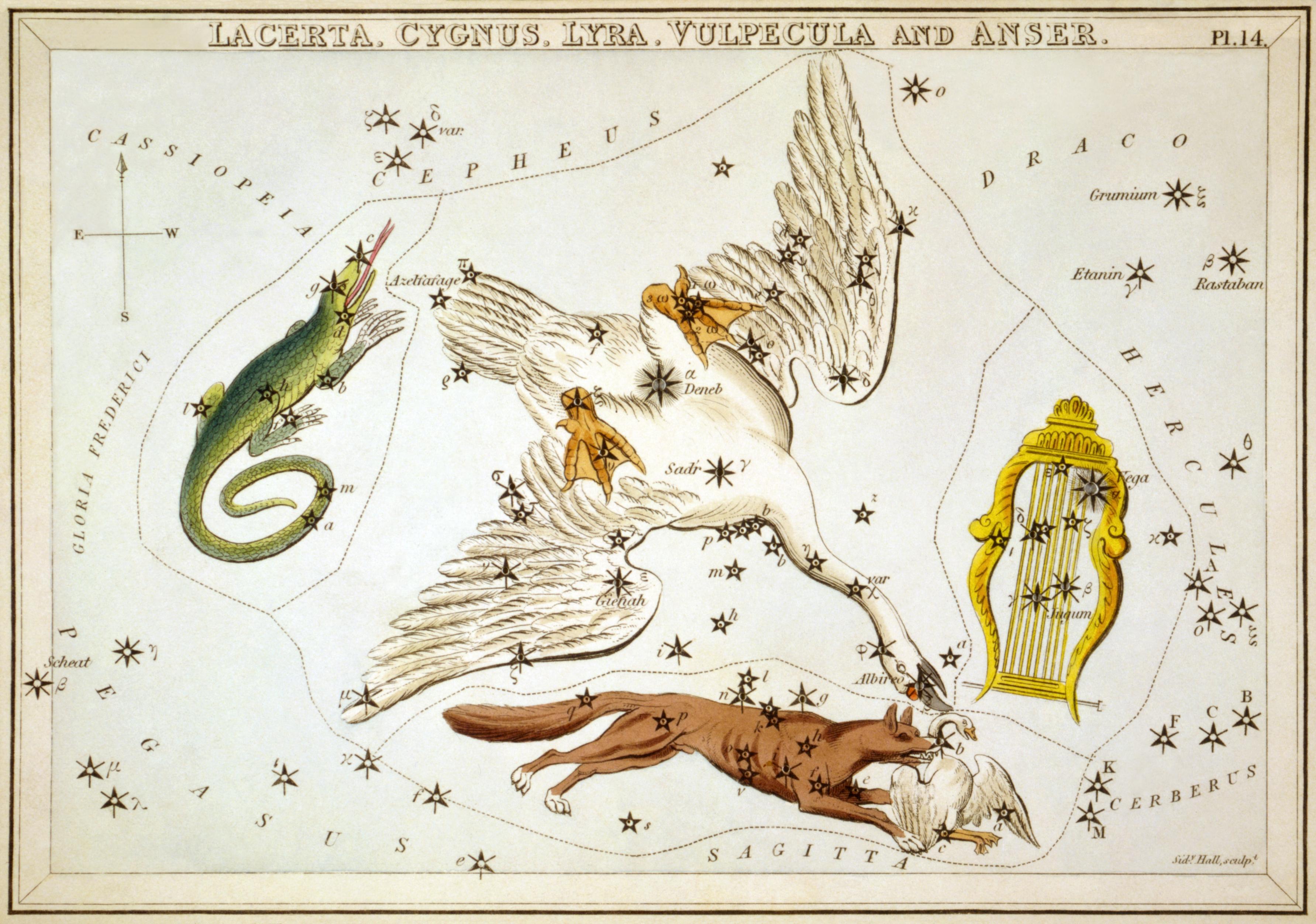 Карточка №14: Ящерица, Лебедь, Лира, и Лисичка с Гусем