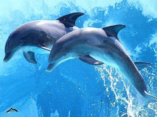 В первом молдавском дельфинарии прошёл протест недовольных