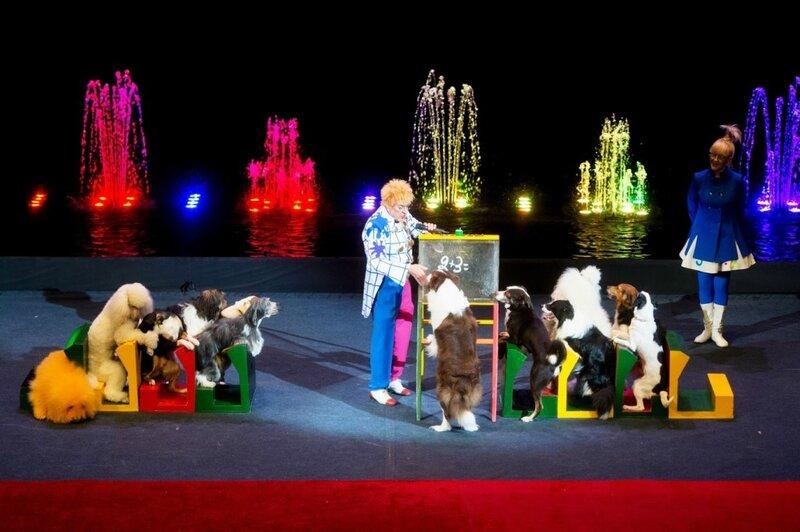 Николай Ермаков со своей собачьей академией - Цирк танцующих фонтанов Аквамарин
