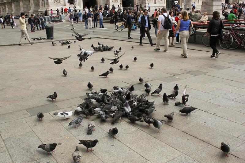 Голуби на площади Дуомо