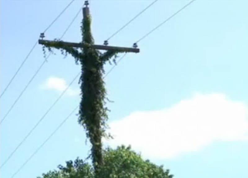 3. В сентябре 2010 года образ Иисуса на кресте увидели в телеграфном столбе, обвитом стеблями. Об уд