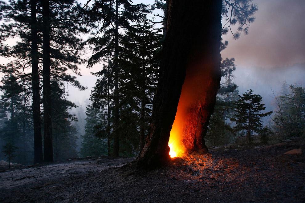 Пожары обычно бывают нижние и верхние. При низовом пожаре сгорает трава, лишайники, мхи, ветки на зе