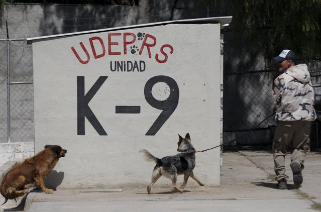 A dog trainer works with previously abandoned dogs at a police centre in Saltillo, Mexico March 4, 2