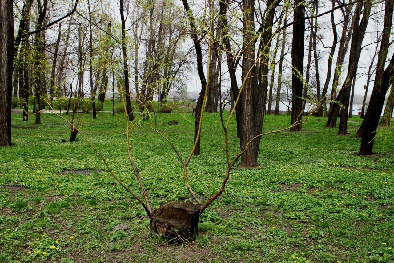 Дерево в Наводницком парке