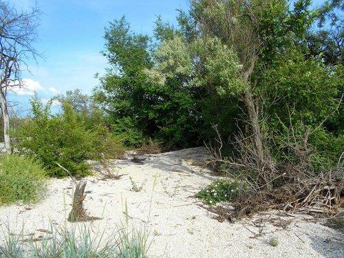 Лес, на песках ... DSCN5817.JPG