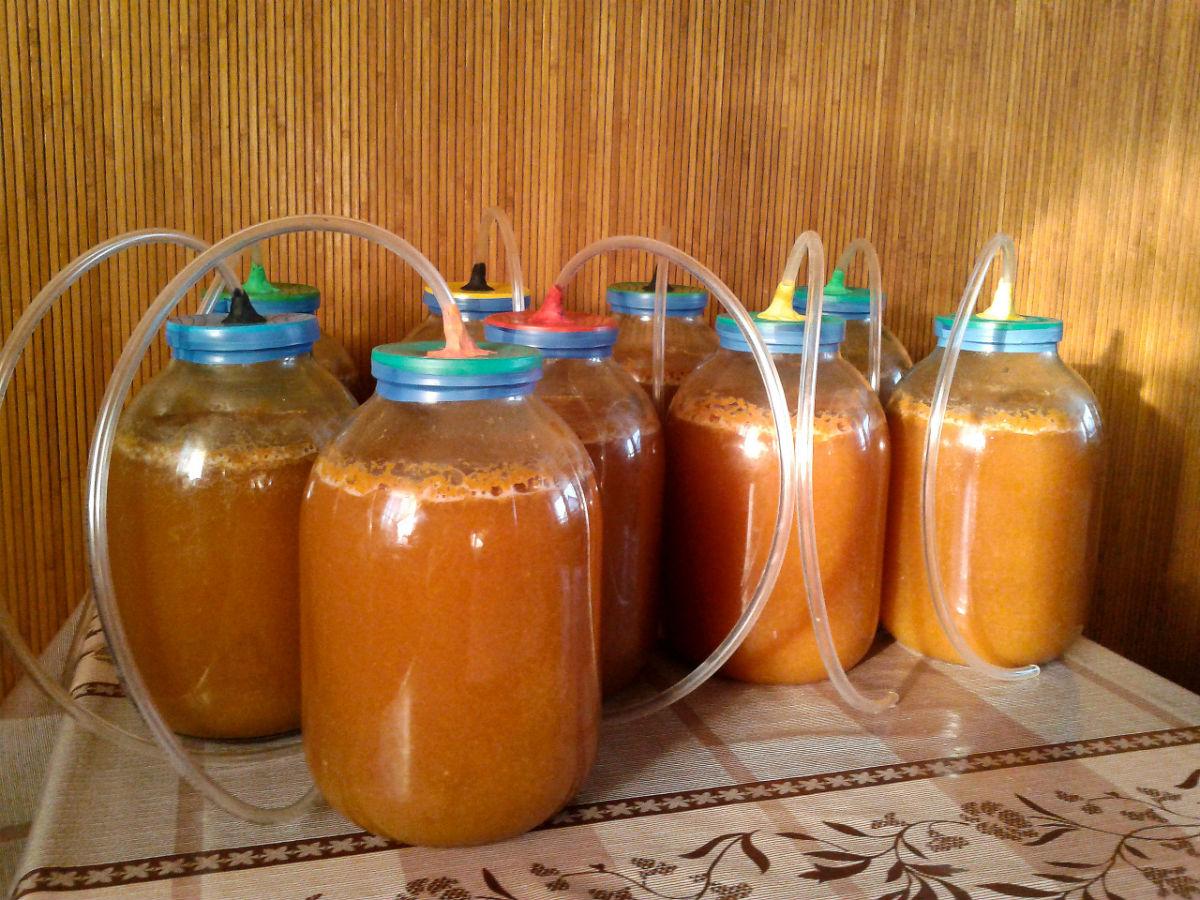 Сделать вино из абрикосов в домашних условиях рецепт 73