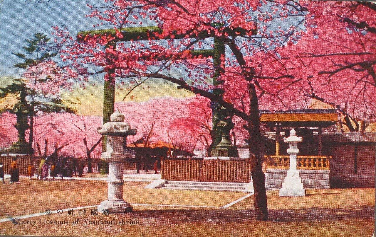 Токио. Цветение вишни в храме Ясукуни