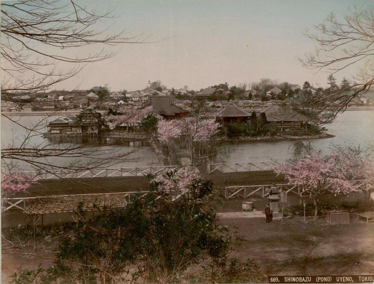 Токио. Высочайше пожалованный парк Уэно. Пруд Синобадзу