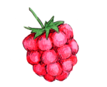 raspberry .png