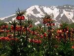 1024px-Shamizdin_Flowers.jpg