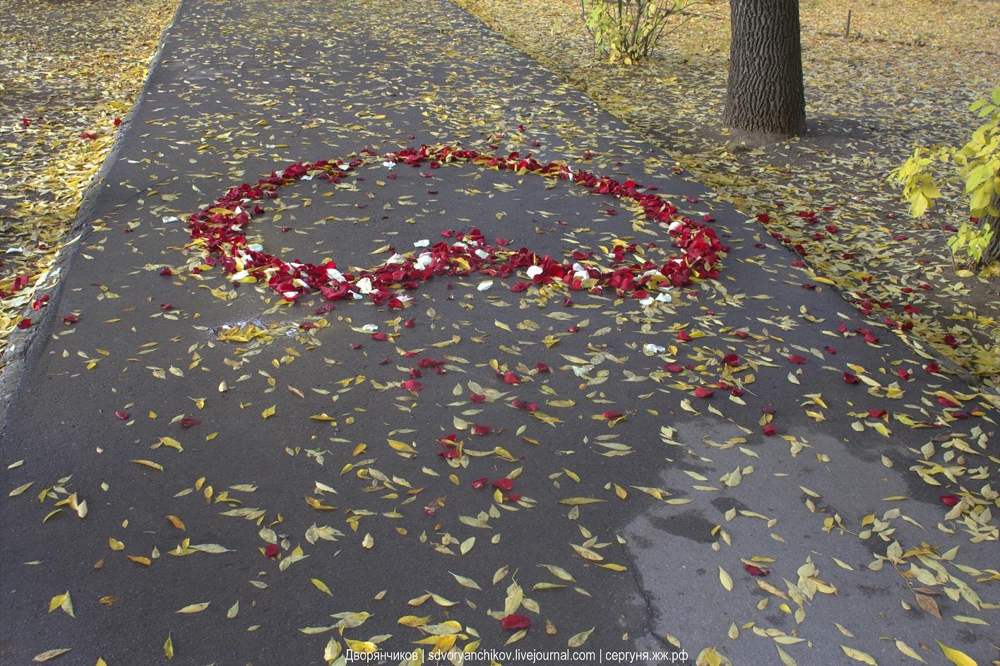 Сердце из лепестков роз - парк вгс - 14-10-2017