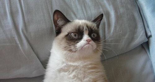 сердитая кошка фото