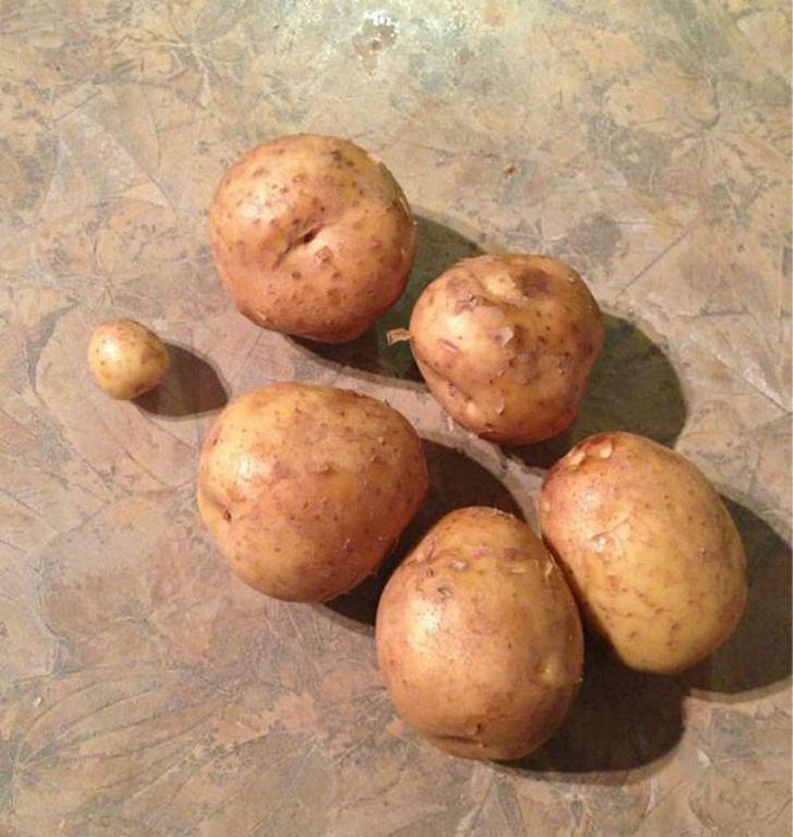 «Попросила купить картошки, штук шесть».