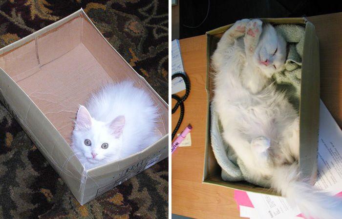 5. Кот и его любимая коробка.