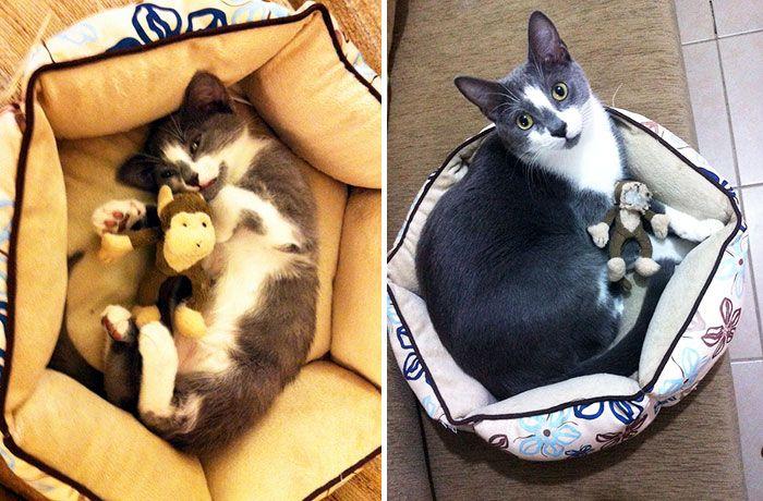 10. Посмотрите, во что за полтора года этот кот превратил бедную обезьянку.