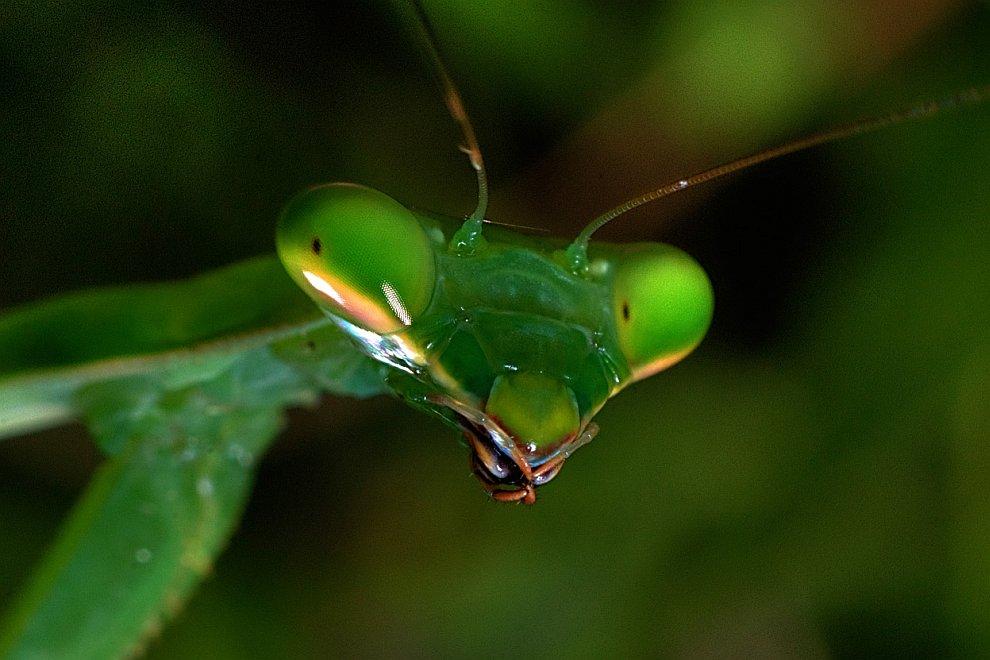 21. Рассвет в Национальном парке Глейшер, Канада. (Фото © Sharon Lyon/National Geographic Pho